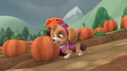 Push dat Pumpkin