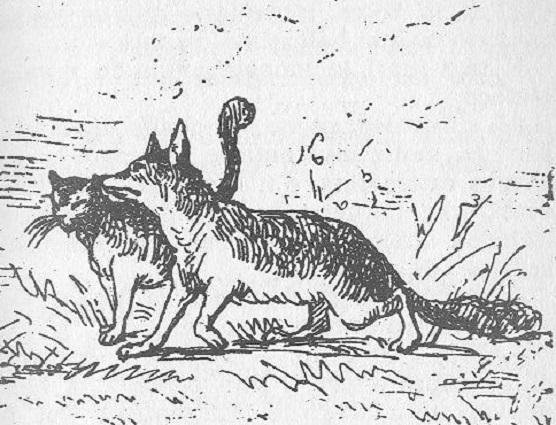 File:Gatto e volpe.jpg