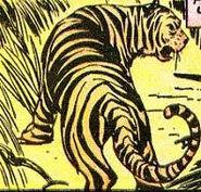 Tigress (Holyoke)