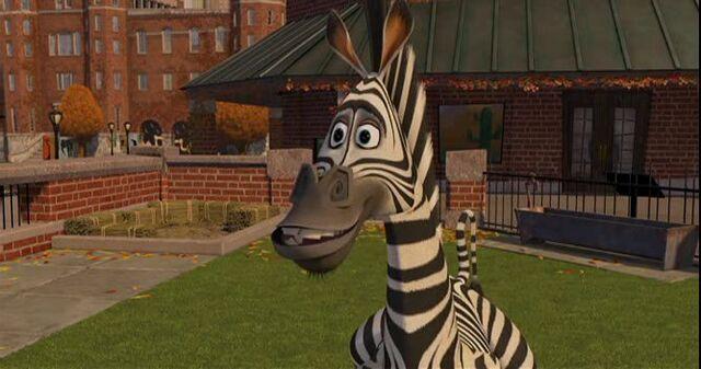 File:Zebra 11.jpg