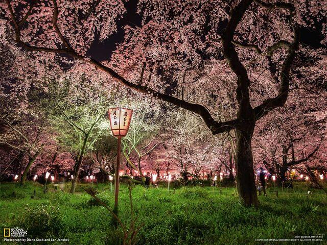 File:02-hirano-shrine-kyoto-japan 1600.jpg psid=1.jpg