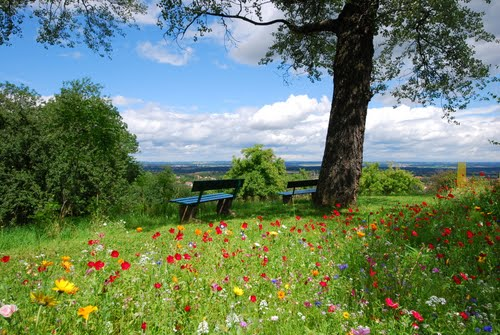 Bench in flower field