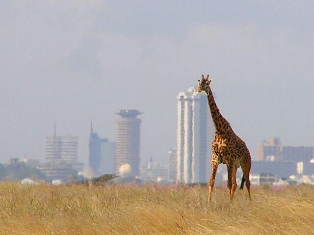 File:Giraffe and Nairobi skyline, Nairobi National Park.jpg