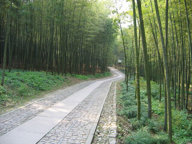 File:China Hangzhou Bamboo Lined Path at Yunqi.JPG