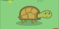 Tiddles the Tortoise