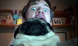What Happened To Pewdiepie S Dogs Eye