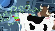 A cow leans on the control panel