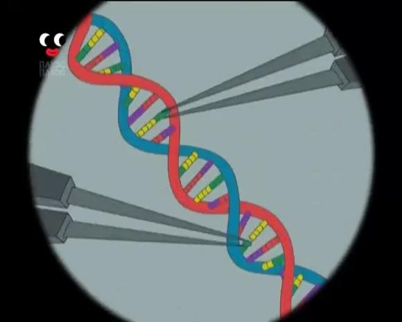 File:DNABasePairing.jpg