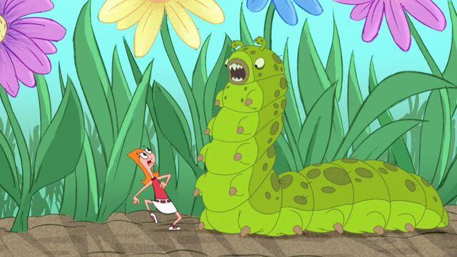 File:Ferocious caterpillar.jpg