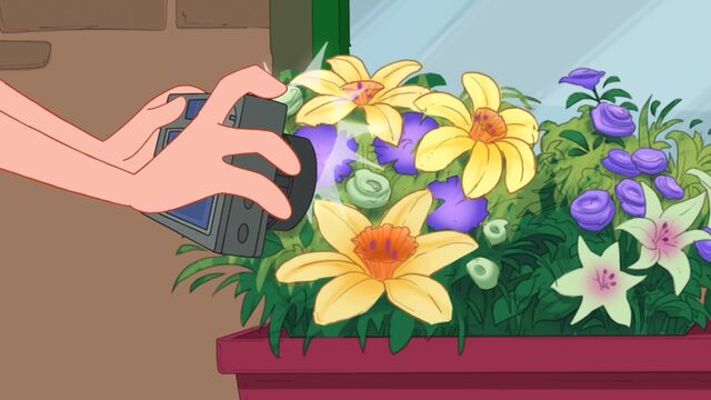File:Candace takes a picture of the daffodils.JPG
