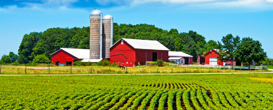 Image result for IMAGES OF FARM