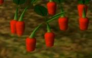 Pikpik Carrots