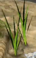 Spiked Grass
