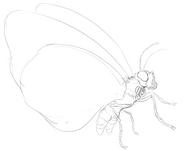 Butterfree schizzo