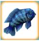 Blue_Cichlid.png