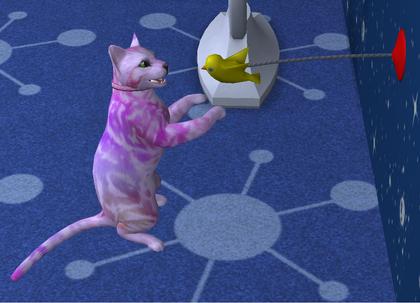 Bawiący się kot.png