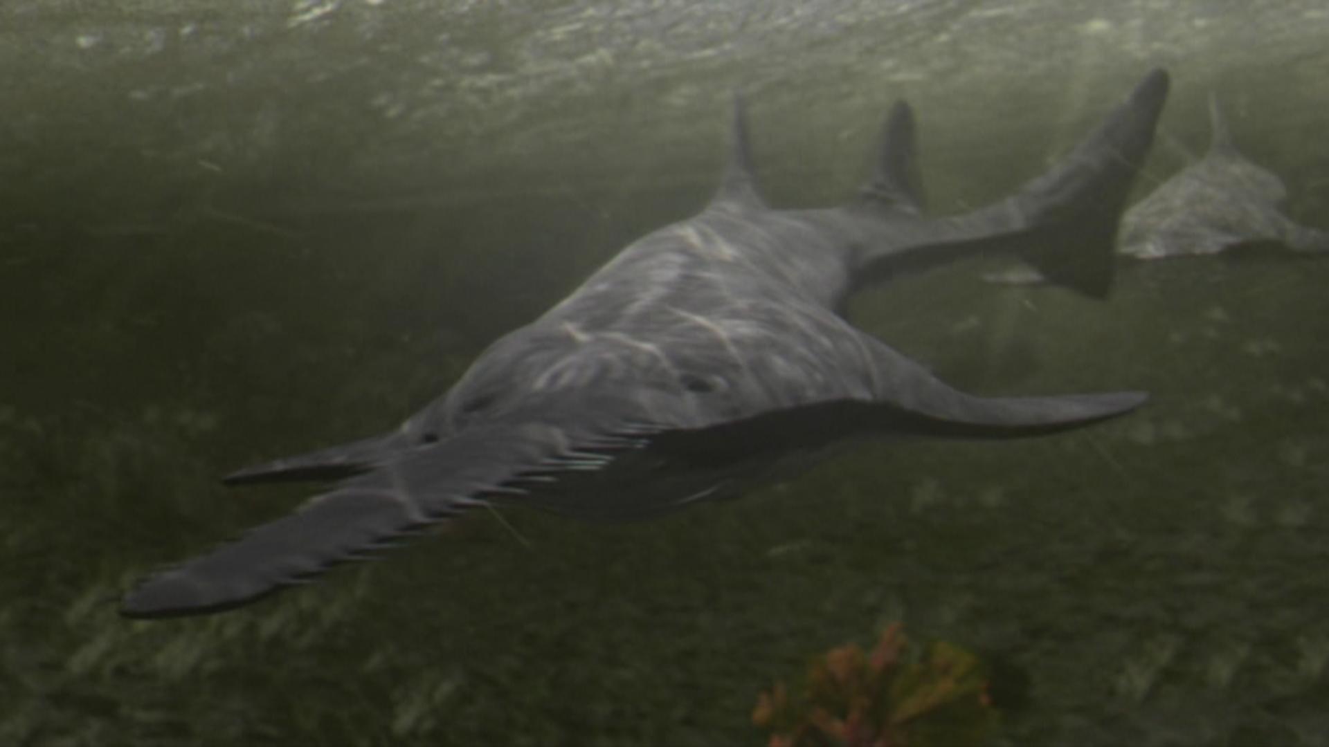 Freshwater fish killers - Topic Top 10 Prehistoric River Monsters