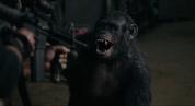 Koba acts like a playful bonobo