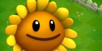 Sunflower (PvZA)