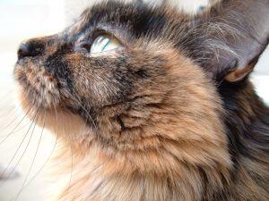 File:Cat that looks like avi.jpg