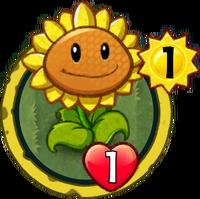 SunflowerH