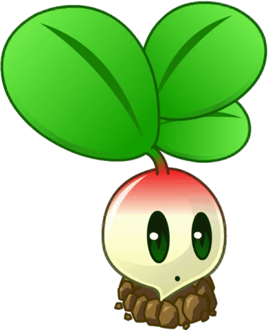 File:Radish close up.png