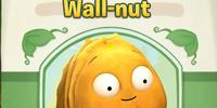 Wall-nut (PvZA)