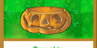 Pumpkin/Gallery