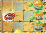 RafflesiaPlantFood3