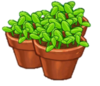50 Sprouts