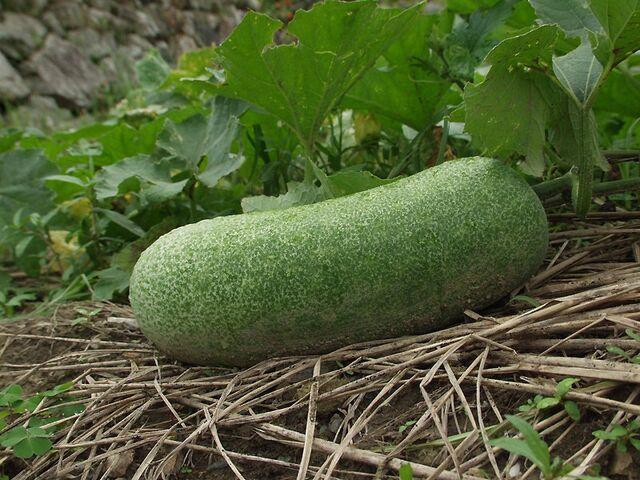 File:Real wintermelon.jpg