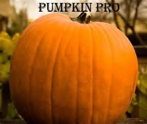 File:Pumpkin Pro.jpg