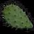 Cactus Flesh icon