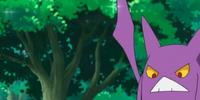 Brock's Crobat