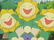 Tammy's Sunflora