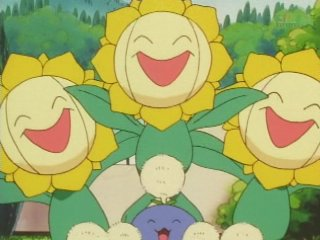 File:Tammy's Sunflora.jpg