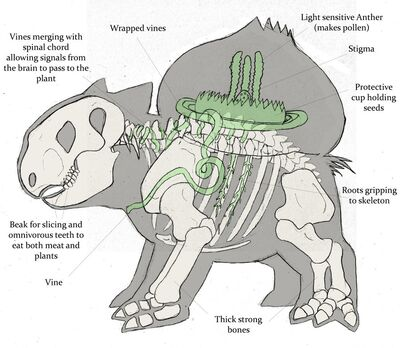 How-Bulbasaur-works-pokemon-anatomy-venusaur-pikachu-ivysaur1
