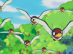 Taillow anime