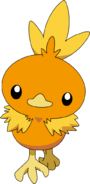 255Torchic AG anime 2