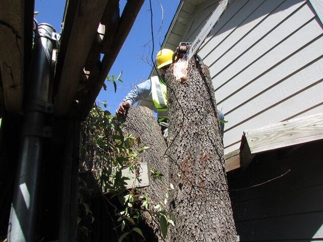 File:Dallas Tree Removal - Dallas Tree Service - 214- 556-5079.jpeg