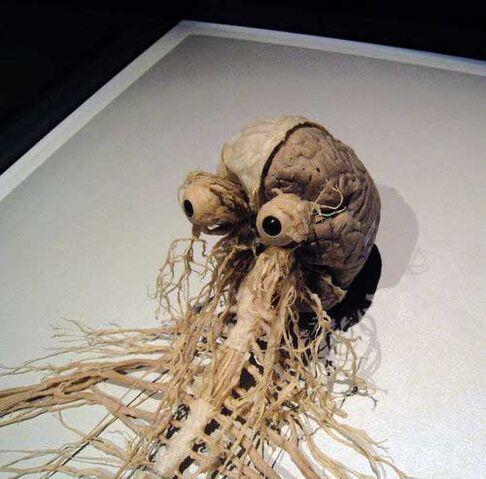 File:SCP Skulljumper