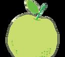 Citrus Scale