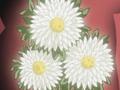 HPC36.Flower