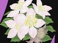 HPC06.Flowers