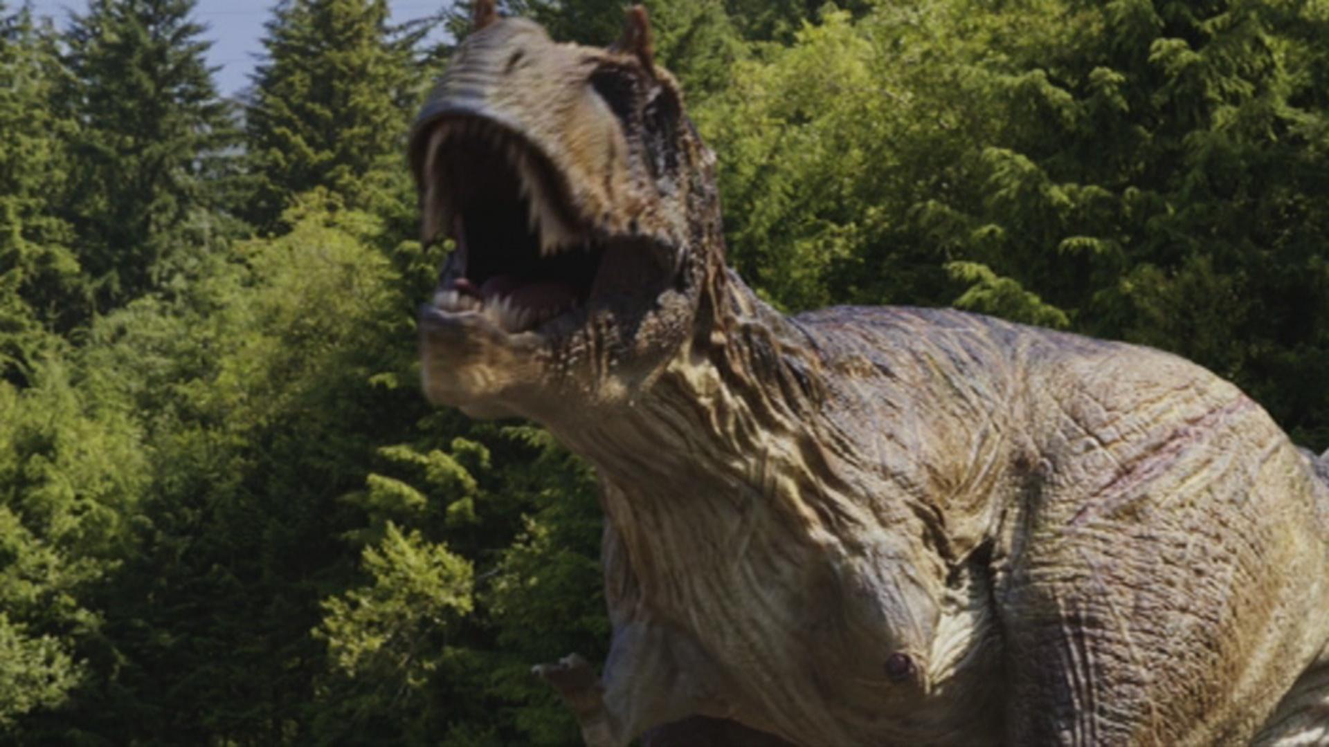 Primeval New World Albertosaurus Albertosaurus | Wiki P...