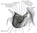 Lacrimal nerve