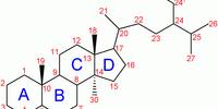 Ketosteroids