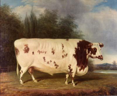 File:J Loader 1845 Shorthorn Bull.jpg