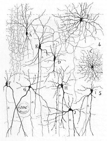 File:Cajal actx inter.jpg