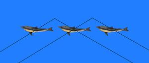 Stereogram Tut Eye Trick Composite Dolphin